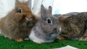 médiation lapins